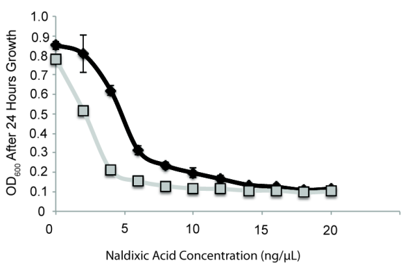 Fig. 2 HGT of a megaplasmid lowers resistance to nalidixic acid. Megaplasmid containing strain in grey, wild type strain in black